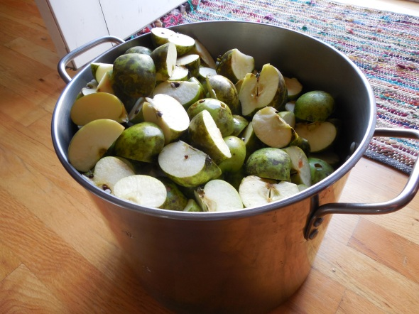A pot of apples, ready to be made into sauce!